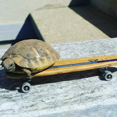 longboard landsurf skateboard Skate homemade bambù WhaleBOARDS turtle fingerboard